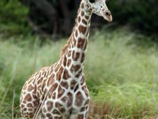 Elegir mejor operador para safari África