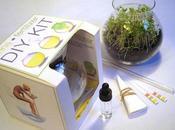 Handmade dispositive making fertilizer from human