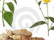 Súperalimentos-Súpercosméticos para 2012..(Parte