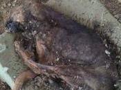 Sevilla, perros abandonados conviviendo compañeros muertos