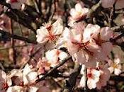 primeras flores primavera