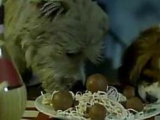 cena antológica Dama Vagabundo perros reales