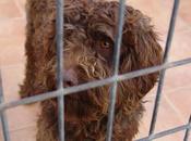 BARNIE, perro aguas perrera Malaga, dejemos vida acabe ahí.