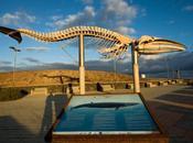 Esqueleto ballena Rorcual Boreal (Balaenoptera borealis) Villa Silos Tenerife
