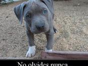 comportamiento perro depende educación