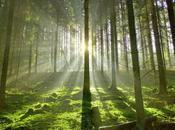 Mundial Forestal
