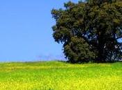 Despertador: Celebramos primavera llamadita