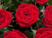 Cultivo rosales miniatura (I): como separar esquejes