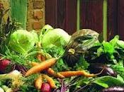 Clasificación Hortalizas Verduras